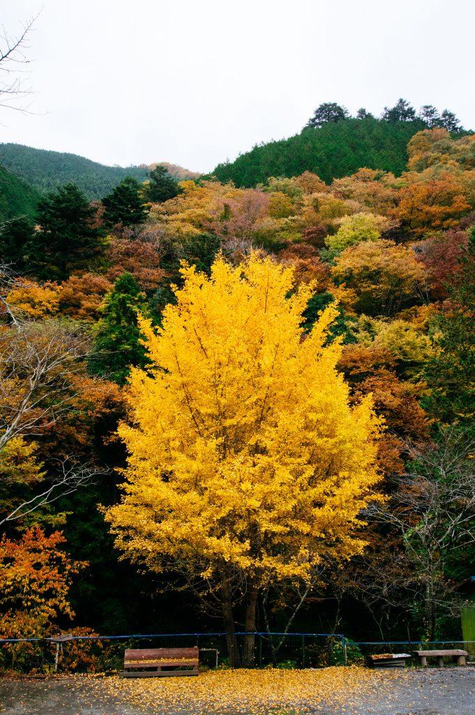 平成30年11月8日(木)